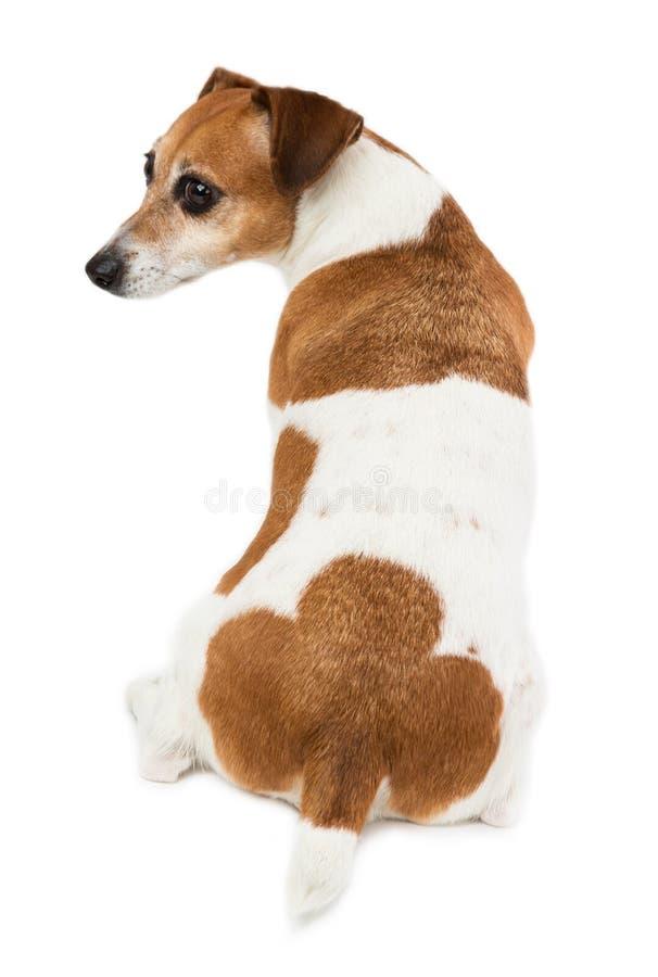 De rug van de hond, ezel, billen royalty-vrije stock foto
