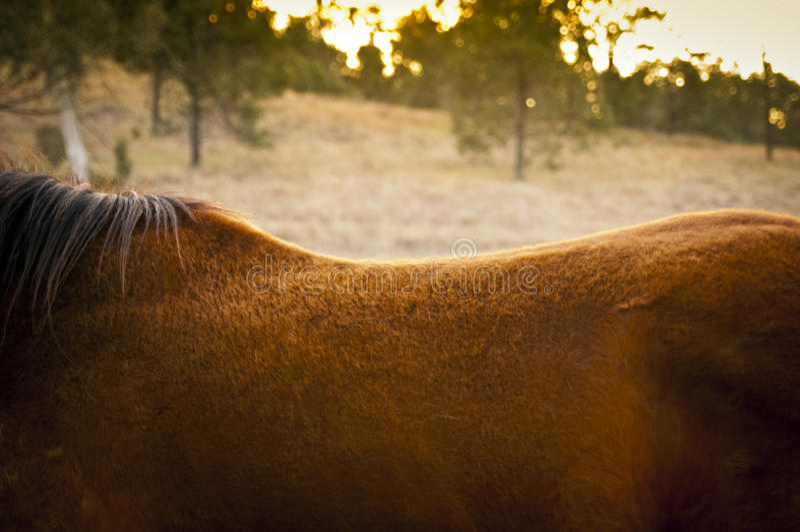 De Rug van het paard royalty-vrije stock foto's