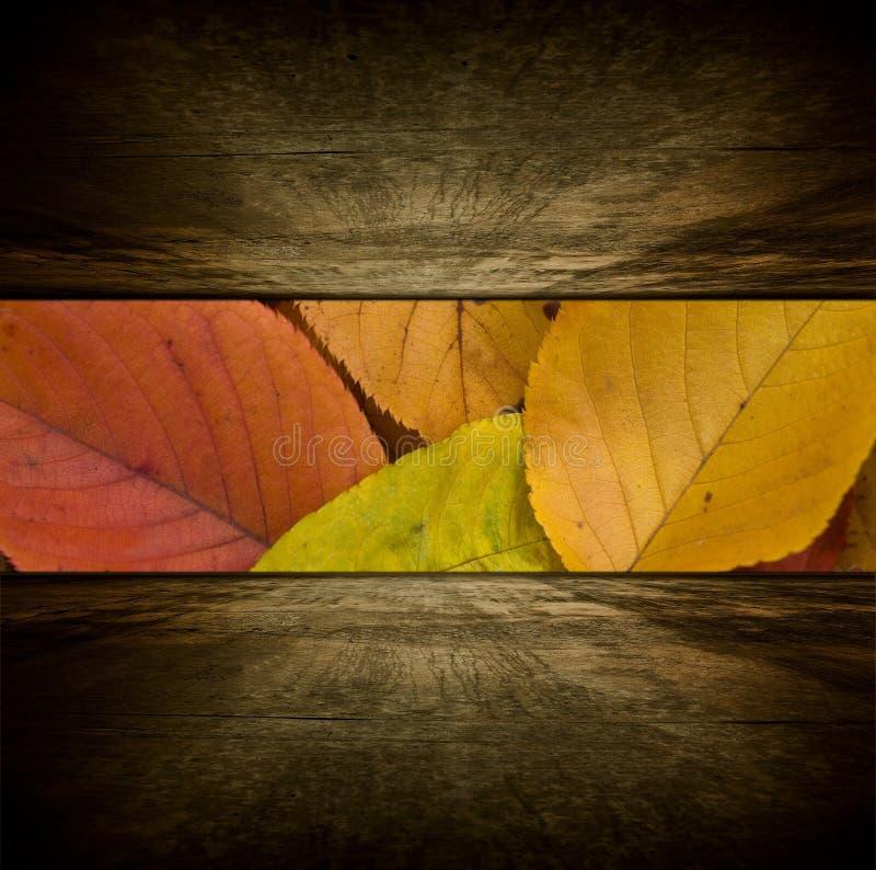 De ruimte van de herfst