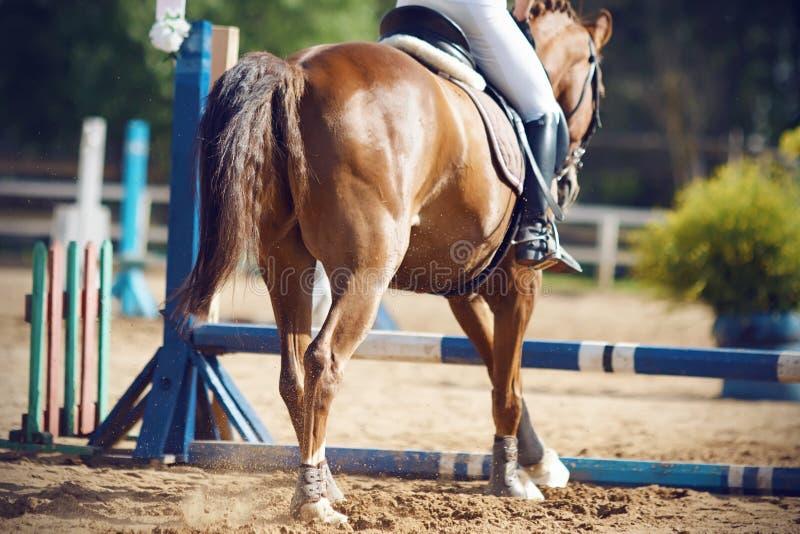 De ruiter met een paard gaat over de barrière, een mening van de achtergrond springen stock foto