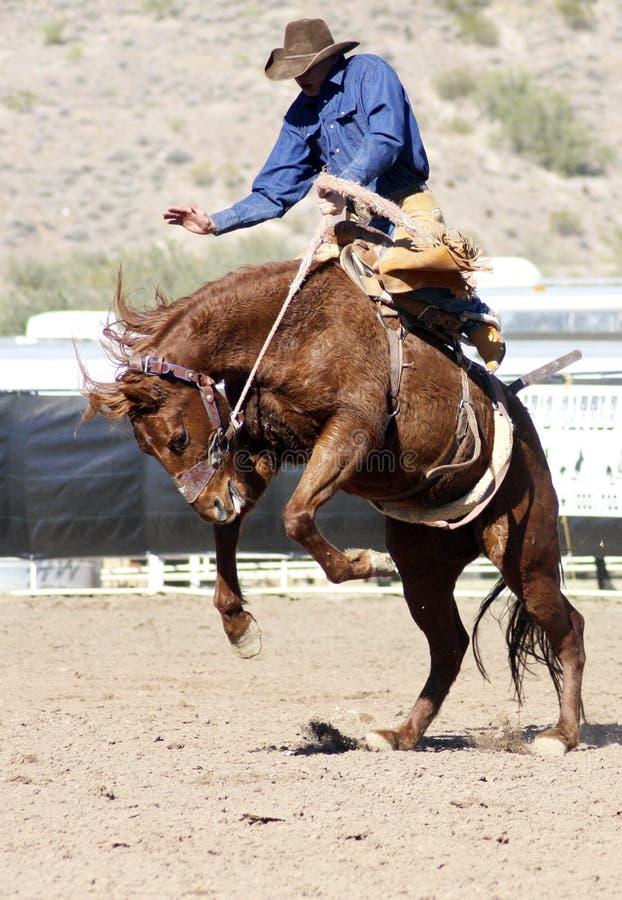 De Ruiter van Bucking Bronc van de rodeo stock afbeelding