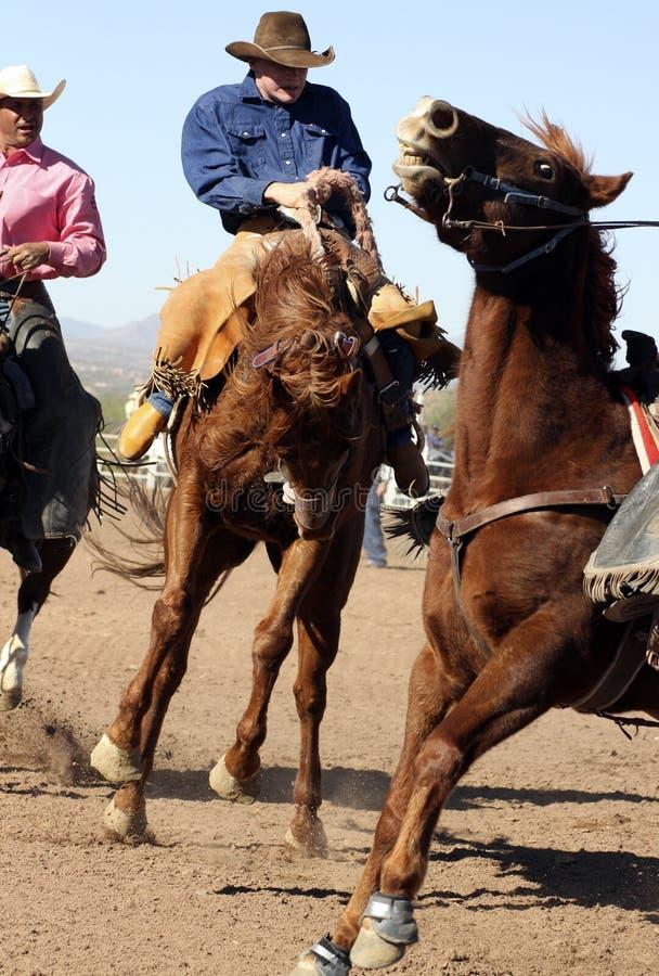 De Ruiter van Bucking Bronc van de rodeo royalty-vrije stock foto
