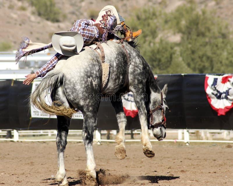 De Ruiter van Bucking Bronc van de rodeo stock afbeeldingen