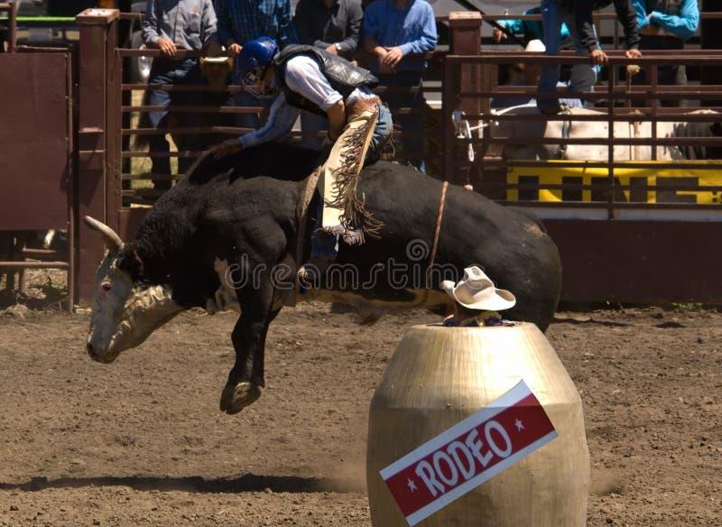 De Ruiter van de Stier van de rodeo royalty-vrije stock foto