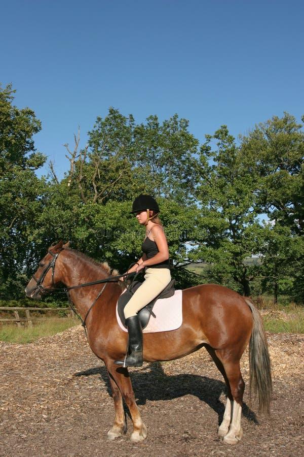 De Ruiter van het paard stock foto's