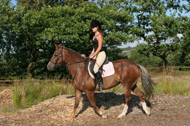 De Ruiter van het paard stock afbeelding
