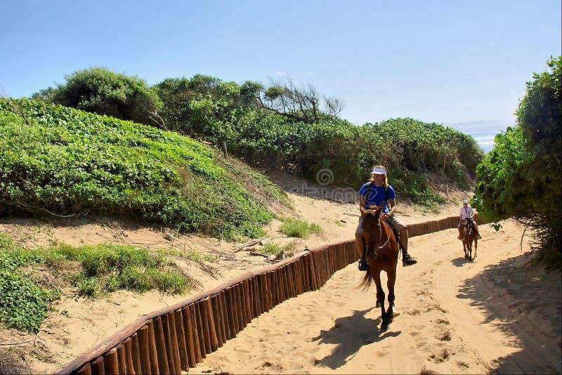 De ruiters van het paard op zandweg stock afbeelding