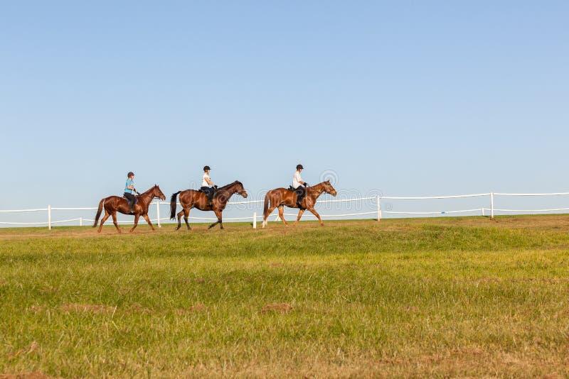 De Ruiters van paardenvrouwen royalty-vrije stock foto