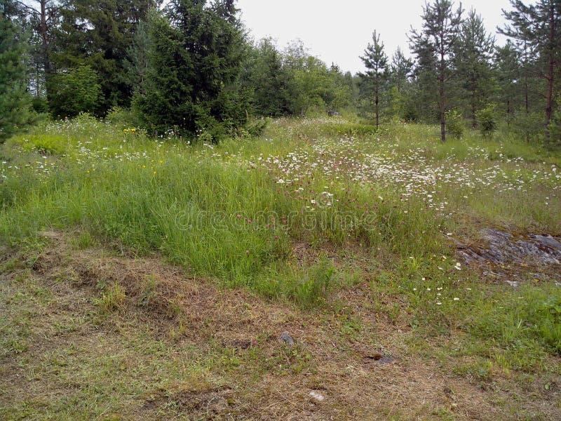 Is de Ruskeala marmeren steengroeve omgezet in mooi park in Russisch Karelië stock foto