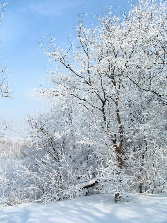 De Russische winter royalty-vrije stock foto