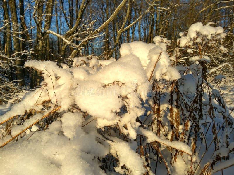 De Russische winter, de winterbos, de winterdag in het bos, landschap, bomen in de sneeuw, buiten de stad, op de jacht stock foto's