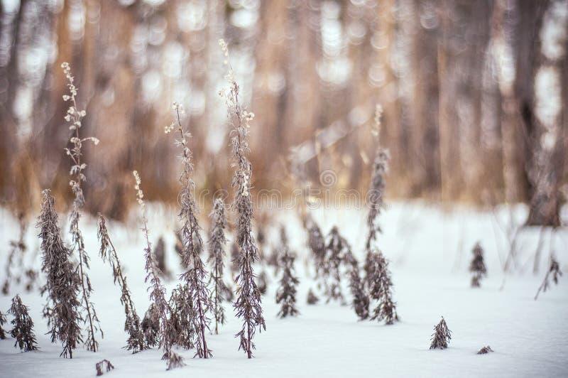 De Russische winter in het hout stock afbeeldingen