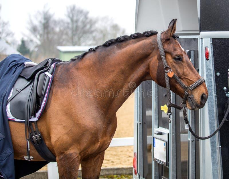 De rust van het sportenpaard na de toernooien royalty-vrije stock afbeeldingen
