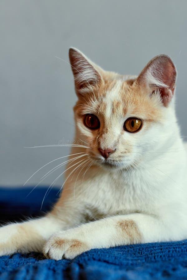 De rust van de katten royalty-vrije stock afbeelding