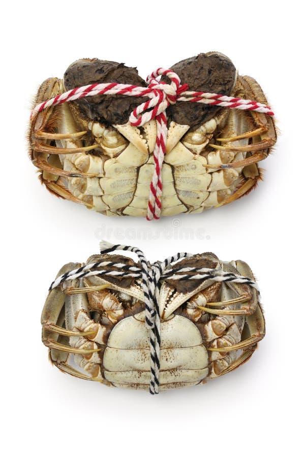 De ruwe harige krabben van Shanghai (mannetje en wijfje) stock afbeelding