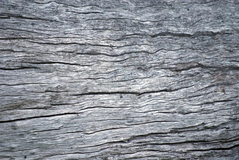 De ruwe oppervlakte van de boomboomstam stock foto's