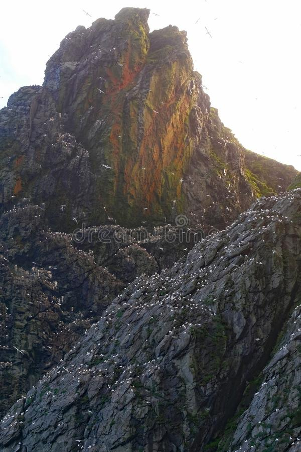 De Ruwe Schoonheid van Boreray, St Kilda Islands, Schotland stock afbeeldingen