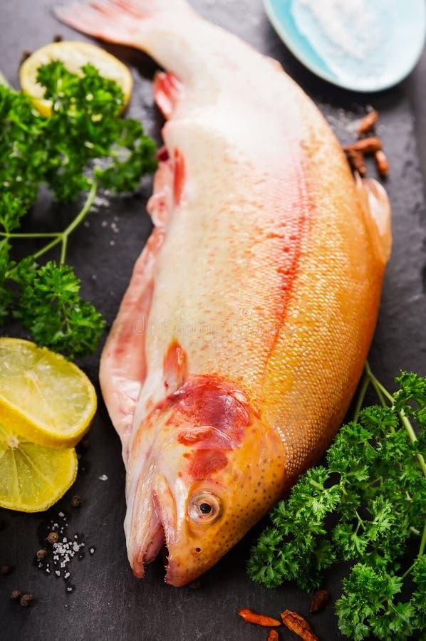De ruwe verse vissen van de regenboogforel met kruid royalty-vrije stock afbeeldingen