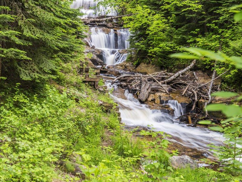 De sabelmarter valt Michigan royalty-vrije stock fotografie