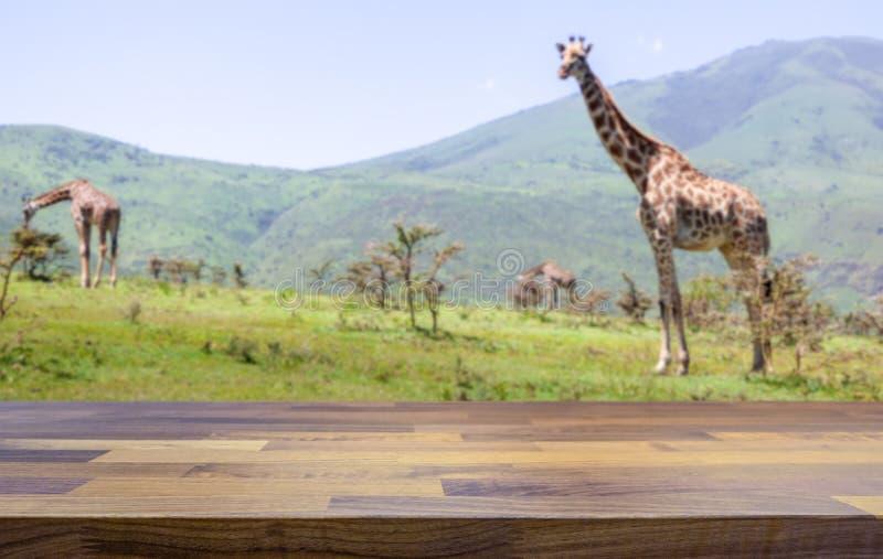 De safari brengt concept en giraffen vaag op de achtergrond onder stock fotografie