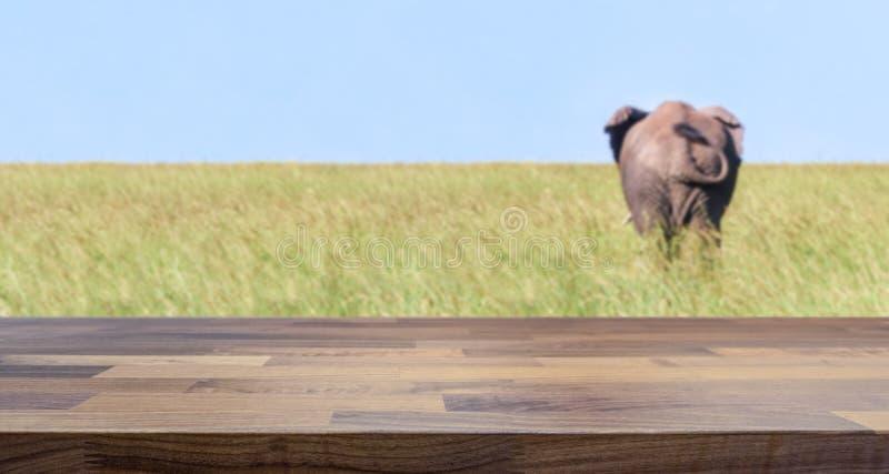De safari brengt concept en olifant vaag op de achtergrond onder royalty-vrije stock afbeelding