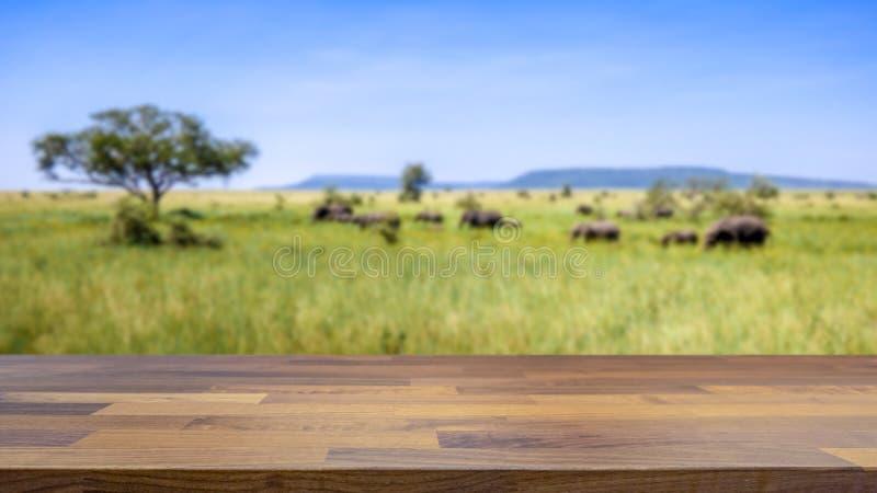 De safari in Tanzania, olifanten kruist de savanne vaag op de achtergrond royalty-vrije stock afbeeldingen
