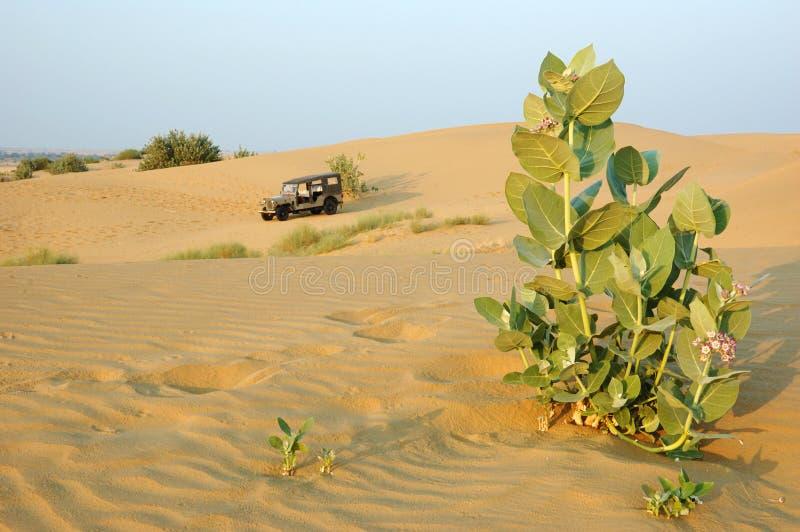 De safari van Jeep in de woestijn van Thar, Rajasthan, India royalty-vrije stock afbeeldingen