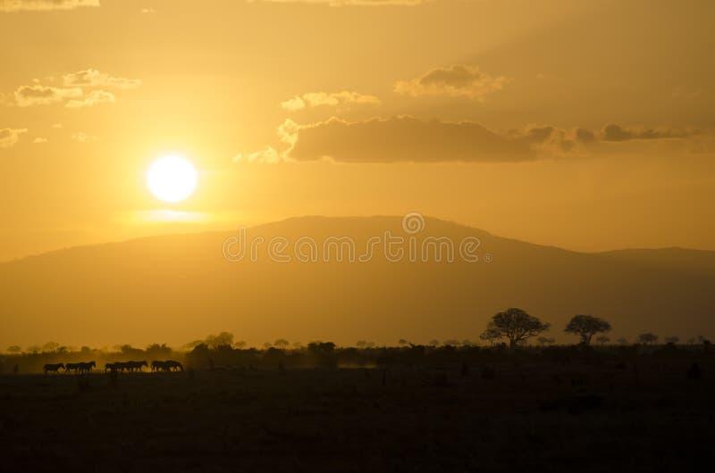 De safarizonsondergang van Afrika stock afbeelding