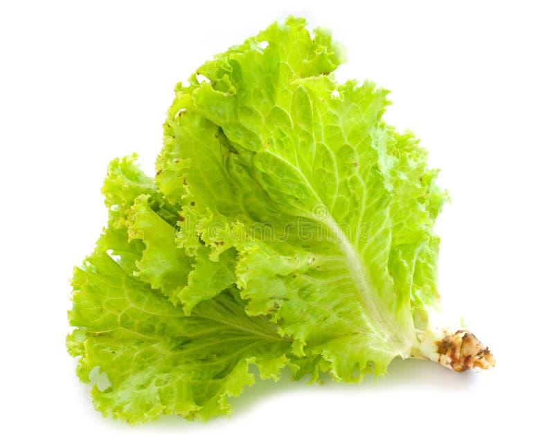 De salade van de sla royalty-vrije stock afbeeldingen