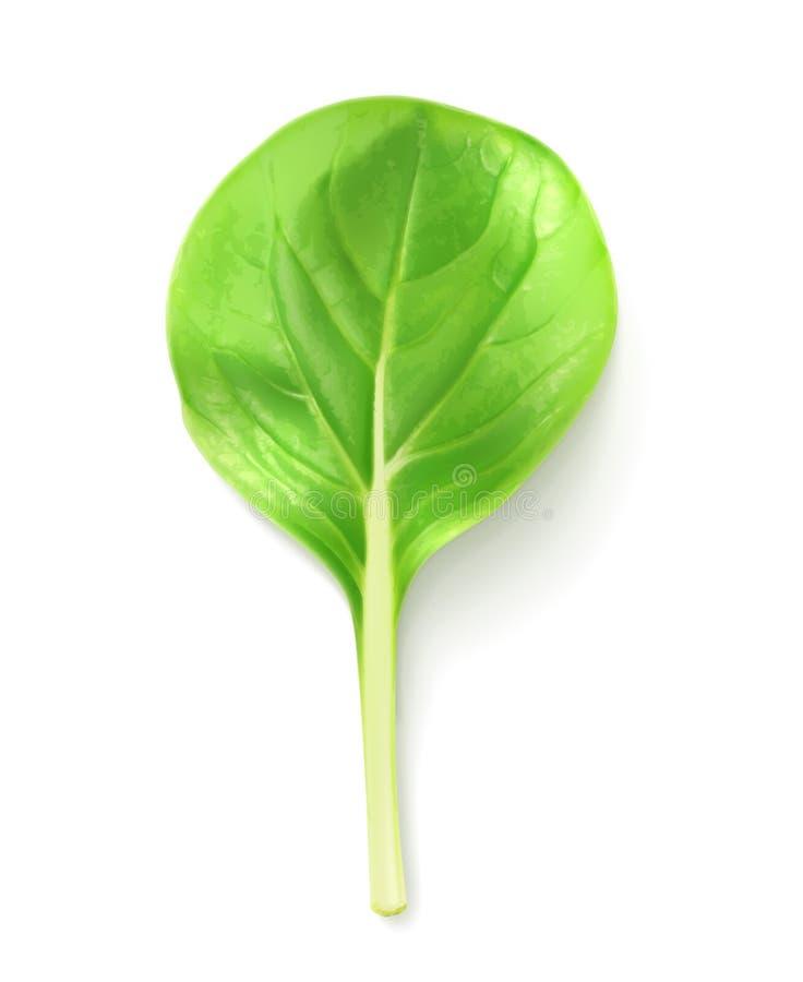 De salade van het babyblad vector illustratie