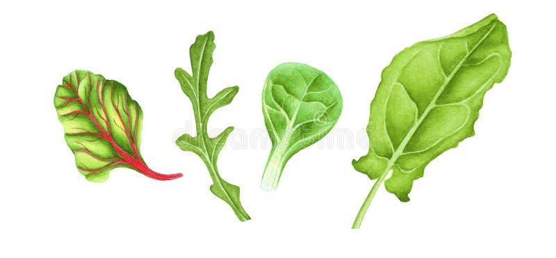 De saladeblad van de waterverf vers mengeling stock foto's