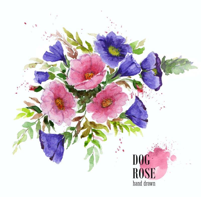 De samenstelling van de bloem boeket van tuinbloemen Waterverfillustratie van van de dogrosetak en malve bloemen stock illustratie