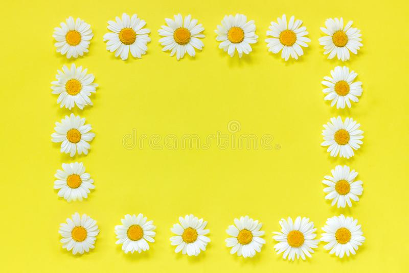 De samenstelling van de bloem Kroon van de kader de bloemenrechthoek van bloemenkamille Vlak leg de hoogste mening van Crearive T royalty-vrije stock afbeeldingen