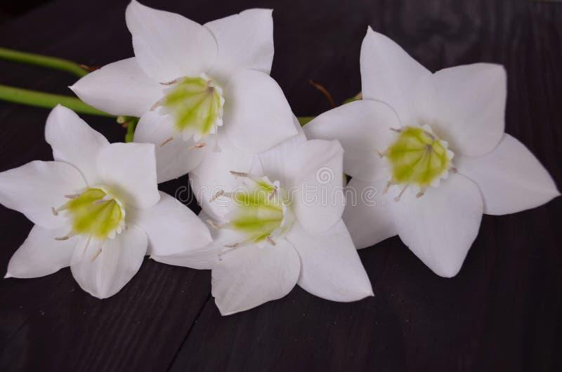 De samenstelling van bloemen stock foto's