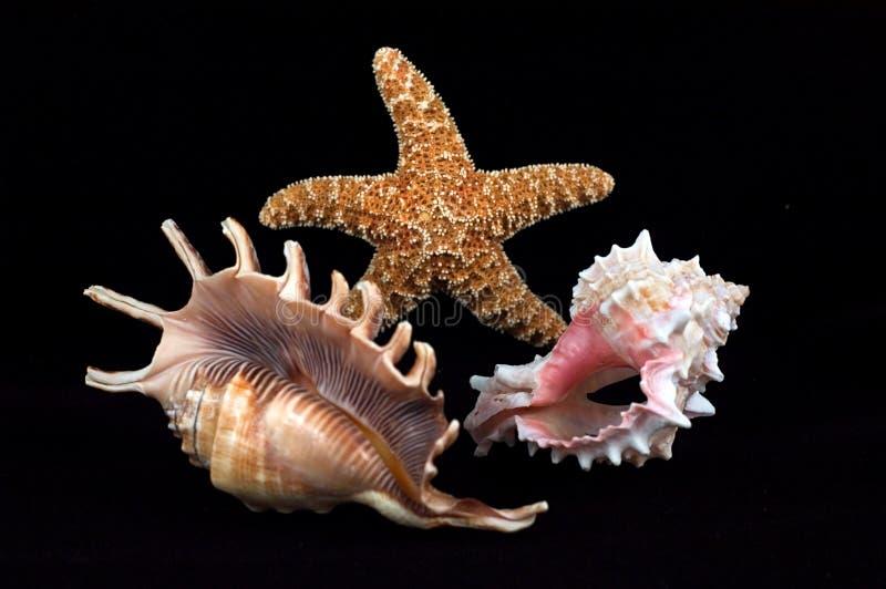 De samenstelling van de zeeschelp stock foto's