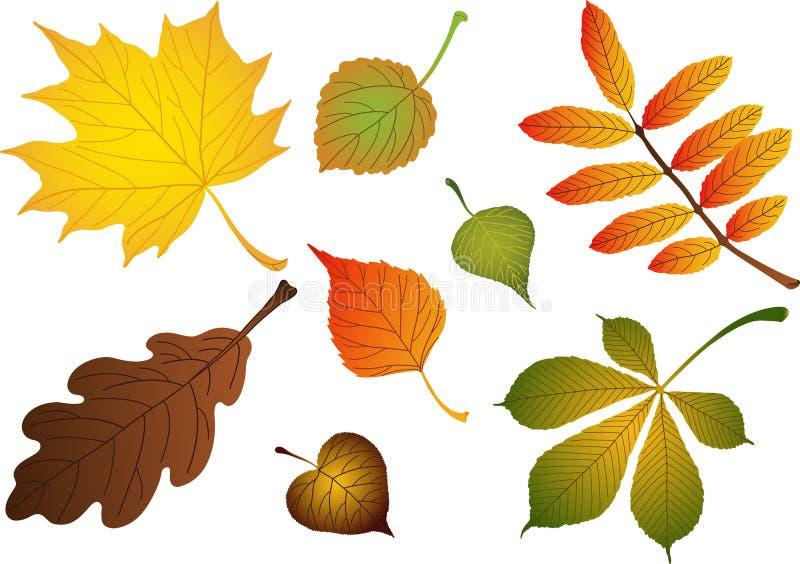 De samenstelling van vectoren van bladeren royalty-vrije illustratie