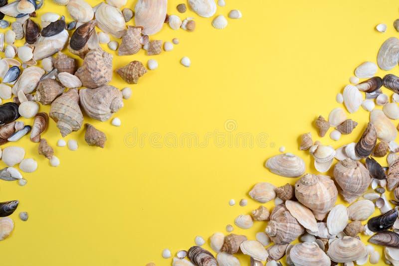 De samenstelling van de zomer Vlak leg, hoogste mening van diverse soortenzeeschelpen op gele achtergrond Exemplaarruimte in mini royalty-vrije stock afbeeldingen
