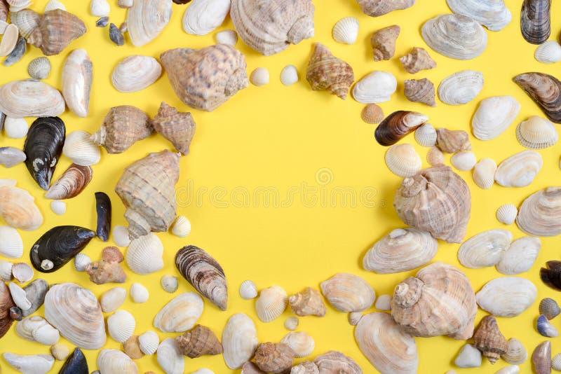De samenstelling van de zomer Vlak leg, hoogste mening van diverse soortenzeeschelpen op gele achtergrond Exemplaarruimte in mini stock foto