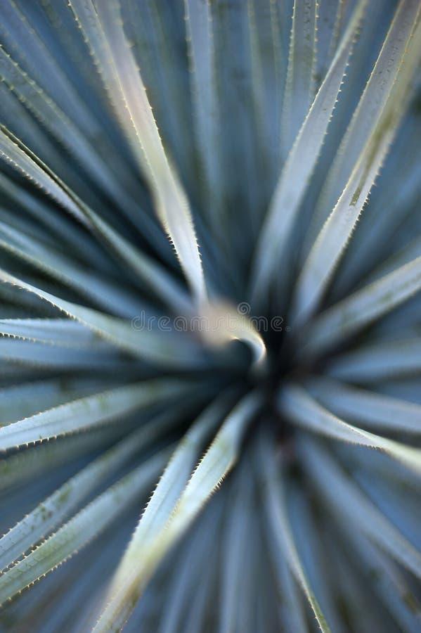 De Samenvatting van de agave
