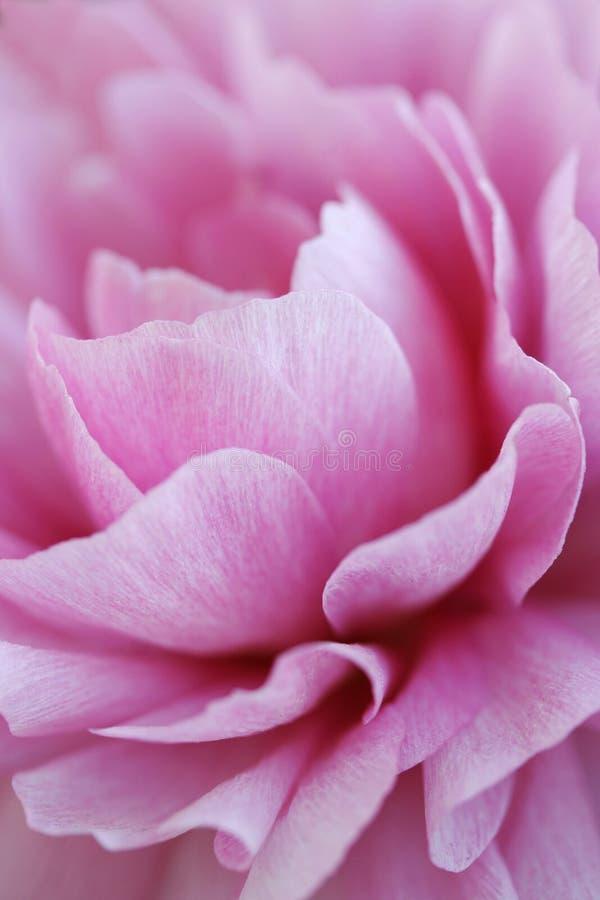 De samenvatting van de bloem stock fotografie