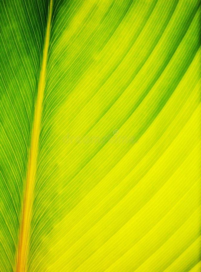 De samenvatting van het palmblad in dichte omhooggaand royalty-vrije stock afbeelding