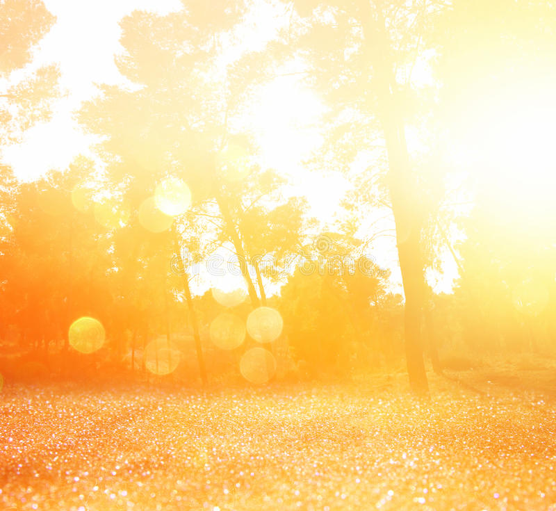 De samenvatting vertroebelde dromerig hout en schittert bokeh lichten stock fotografie
