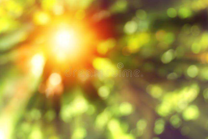 De samenvatting vertroebelde groene aardachtergrond met zonlicht stock afbeeldingen