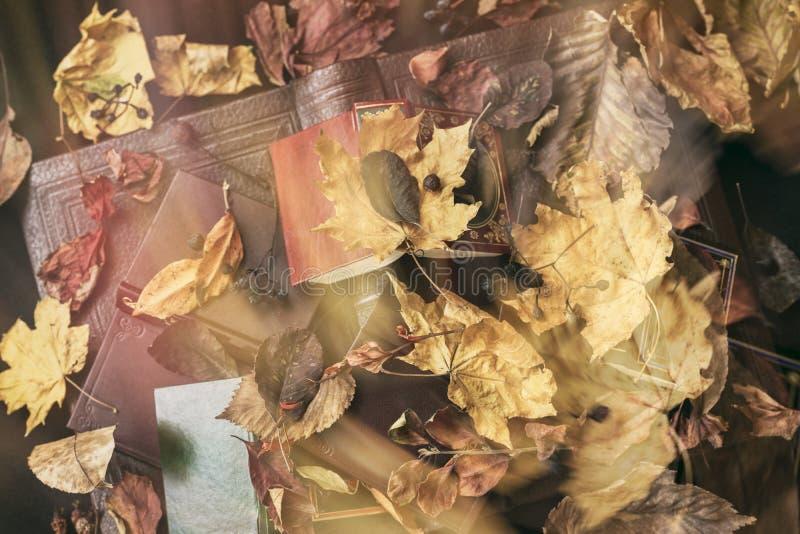 De samenvatting vertroebelde verschillende boeken, hoogste die mening, met droge de herfstbladeren wordt behandeld, zonnige dalin royalty-vrije stock foto