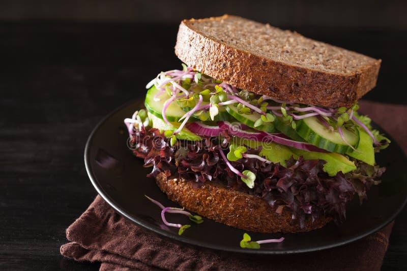 De sandwich van de avocadokomkommer met ui en radijsspruiten royalty-vrije stock foto's