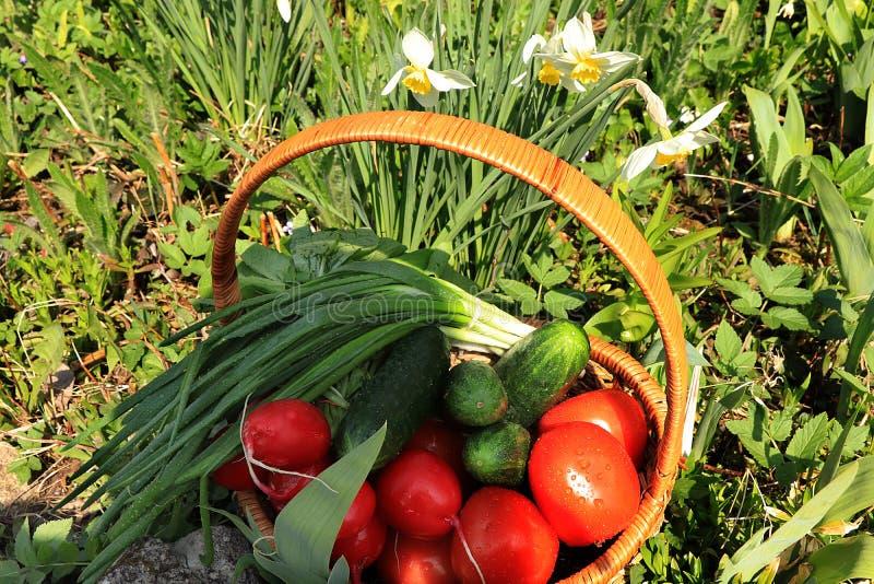 De sappige die tomaten, de komkommers en de uien in een mand in de tuin door de lente wordt omringd bloeien met dalingenclose-up stock fotografie