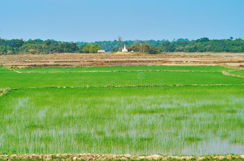 De sappige padie-gebieden, Bago-voorstad, Myanmar royalty-vrije stock foto's