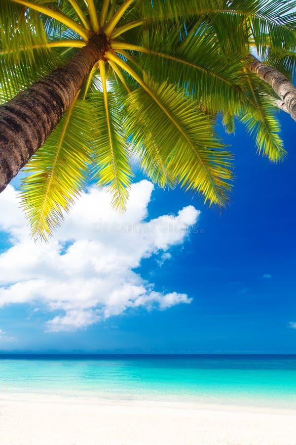 De scène van de droom Mooie palm over wit zandstrand De zomer n royalty-vrije stock afbeelding