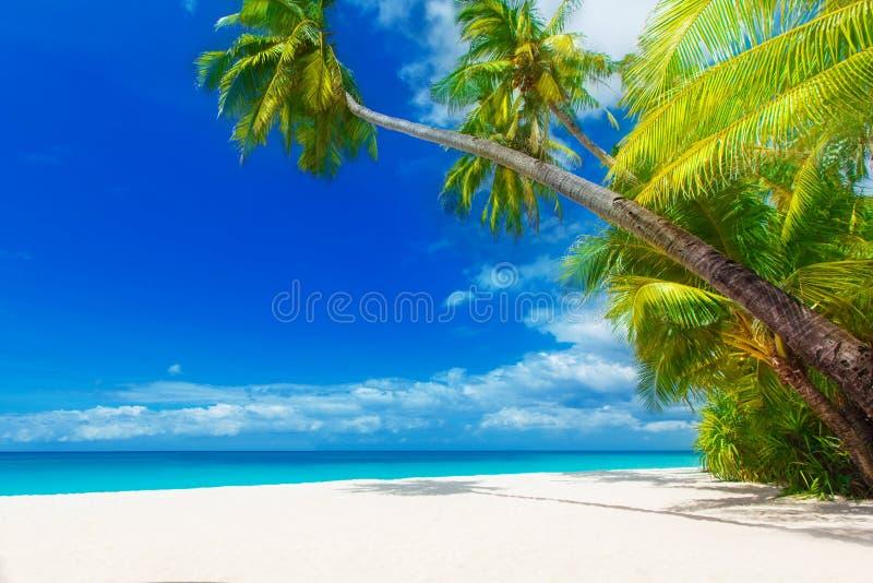 De scène van de droom Mooie palm over wit zandstrand De zomer n stock afbeelding