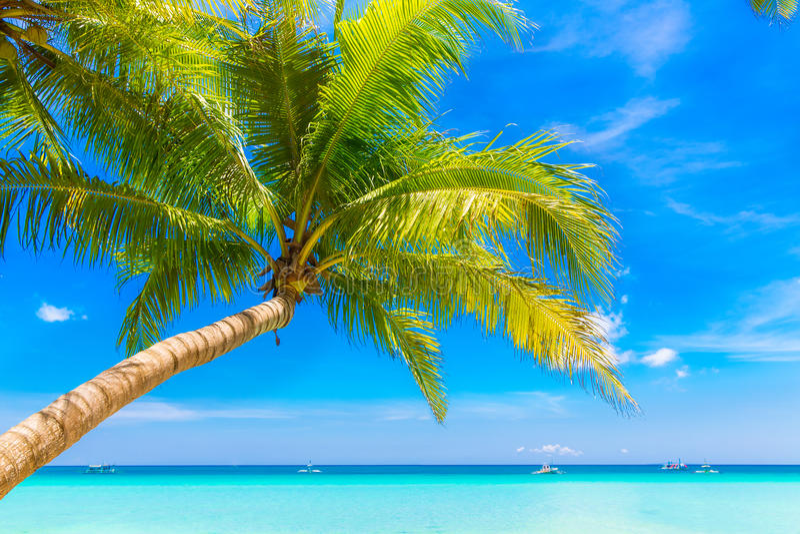 De scène van de droom Mooie palm over wit zandstrand De zomer n royalty-vrije stock foto